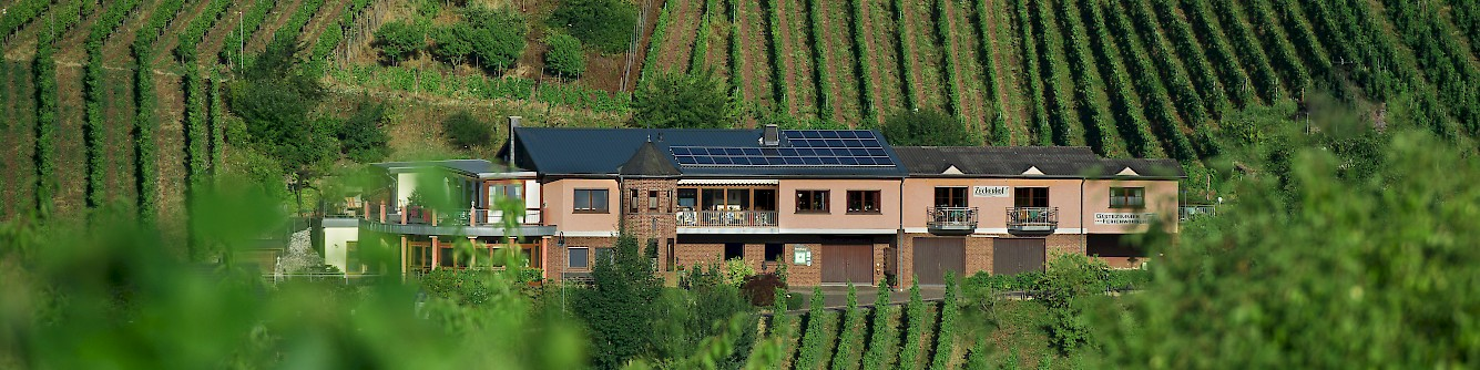 Weingut Zecherhof - Unsere Geschichte 1992